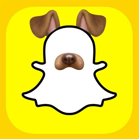 puppy filter    good