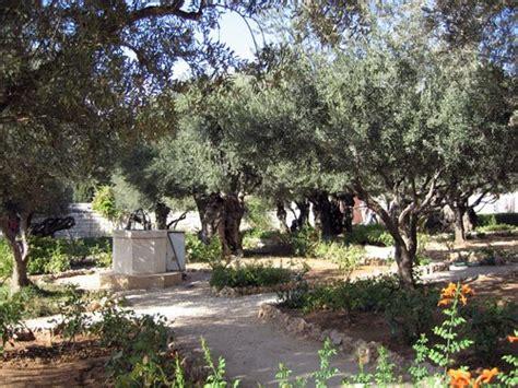 Garden Of Today Margy S Musings Garden Of Gethsemane