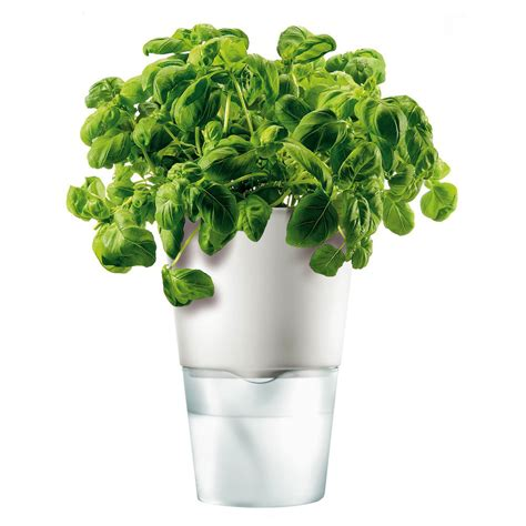 herb pot buy eva solo herb pot 11cm chalk white amara