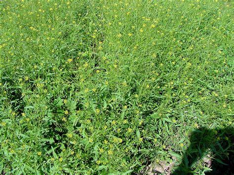 Vegetable Garden Grass Control Home Decor Interior Grass Killer For Vegetable Gardens