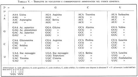 alimentazione acida e basica deossiribonucleasi iv indotta da fago t4