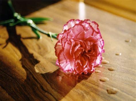imagenes bonitas jpg tipos de flores bonitas im 225 genes y fotos