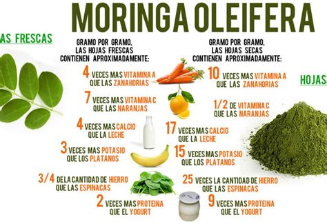 video de la planta de moringa youtube propiedades y beneficios de la moringa