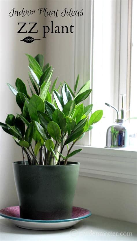 in door plant video indoor plant ideas the zz plant