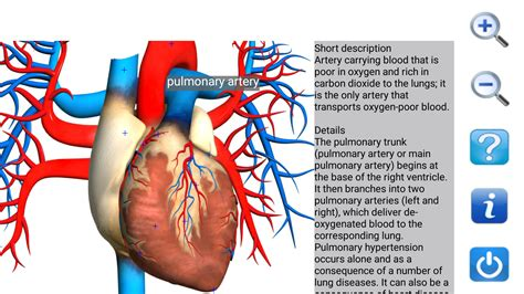 anatomy coloring book app visual anatomy free android apps on play
