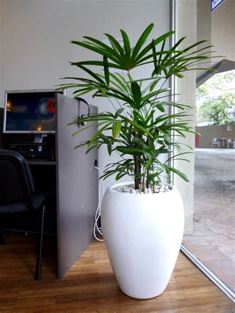 Floor Planters by Floor Standing Planters Perfection Plant Hire