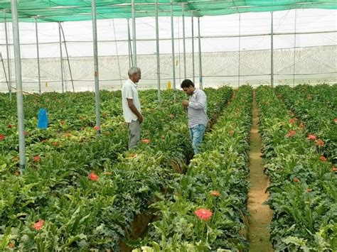 Gardening Department Horticulture Dept In Gurgaon To Lease Out Land For Organic