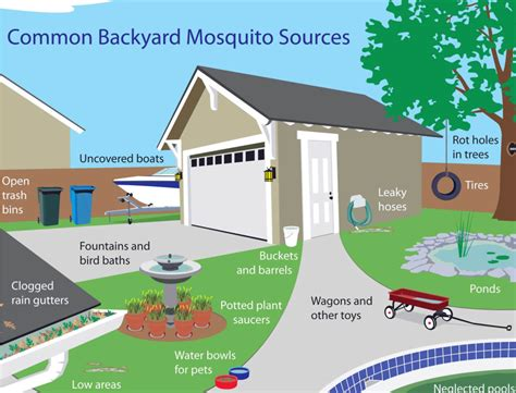 mosquitoes in house mosquito sources around your home livescomfort