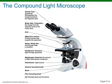 what is a compound light microscope compound microscope compound light microscope best