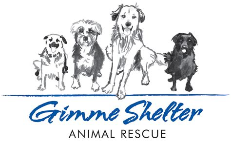 high country puppy rescue gimme shelter animal rescue gimme shelter animal rescue