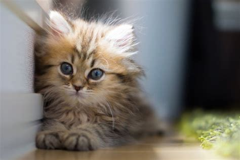 worlds cutest 30 most adorable and cutest cat photos collection vote for the cutest cat