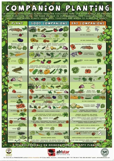 Backyard Vegetable Gardening Guide by Back To The Basics Choosing Plant Varieties For A Raised