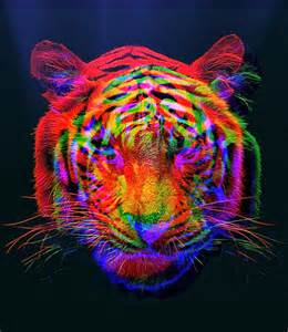 colorful tiger animal color colorful tiger image 747845 on favim