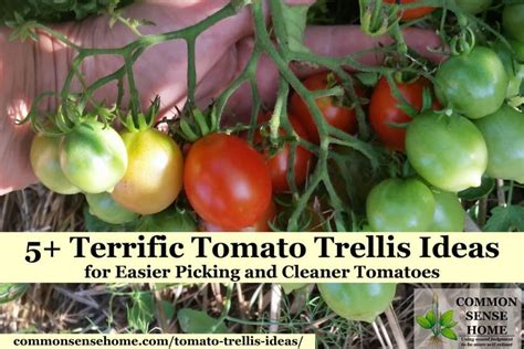terrific tomato trellis ideas  easier picking