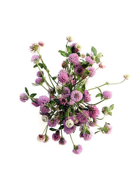 Blumen Fuß 5489 by Pin I Auf Botanica Flowers