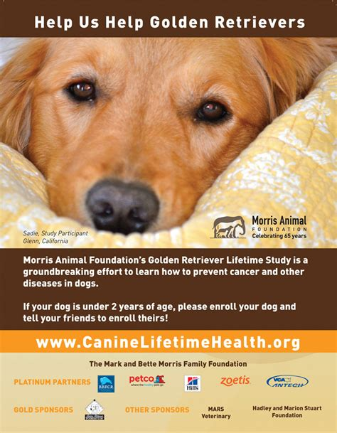 subaru golden retriever commercials golden retriever ad assistedlivingcares