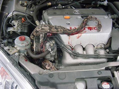 Kia Soul Battery Dead Rongeur Sous Le Capot J Hallucine Volkswagen