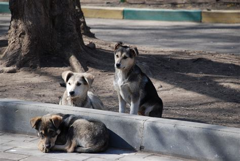 stray puppy stop the murder of stray dogs forcechange