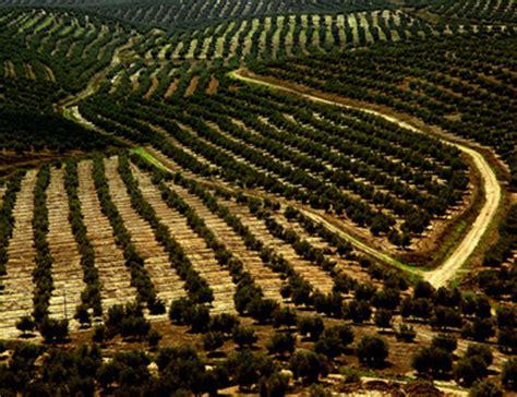 The Olive House Partisi dalla tunisia i quantitativi di olio d oliva che il