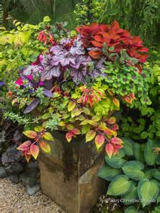 colorful shade plants vibrant color bold design foliage