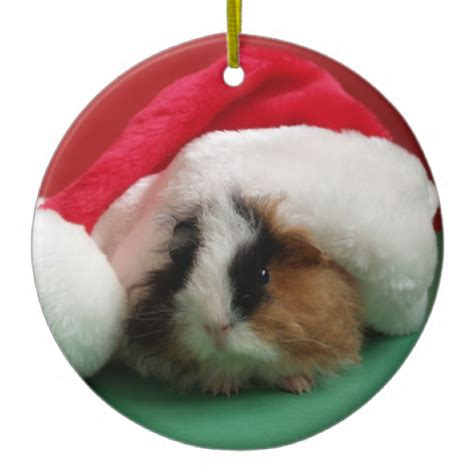 guinea pig animal christmas ornament zazzle