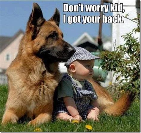 dogs protecting babies dont worry kid i got your back animal photo
