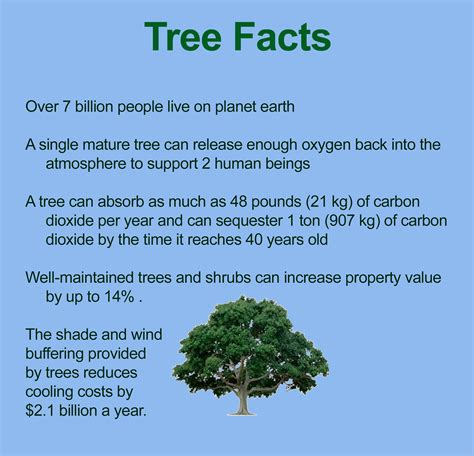 top 28 tree facts people manipulate tree roots wtf