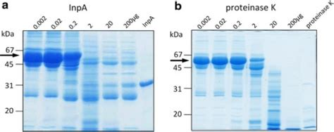 proteinase k sigma comparative sds page analysis of the digestion of whole