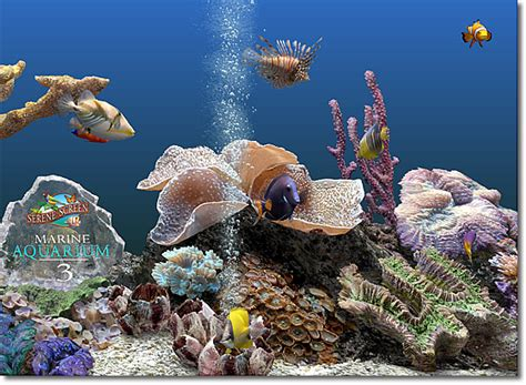 serenescreen marine aquarium download serenescreen marine aquarium download chip