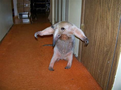 pet anteater damn cool pictures
