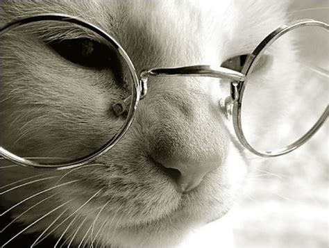 old cat disease cats and alzheimer s