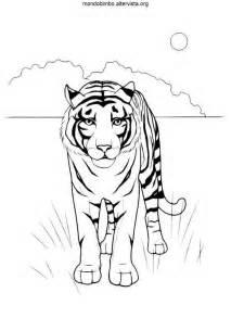 Tigri da colorare mondo bimbo