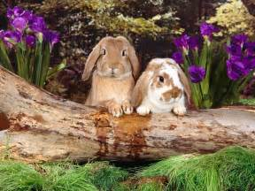 Satanic Home Decor flora and fauna images a little bunny wunny hd wallpaper