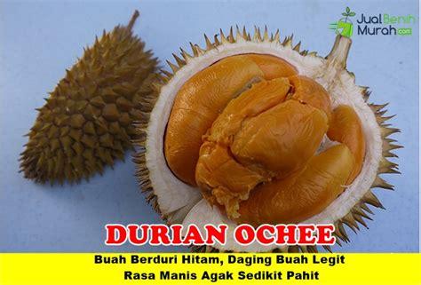 Bibit Durian Duri Hitam bibit durian duri hitam 3 kaki 150cm jualbenihmurah