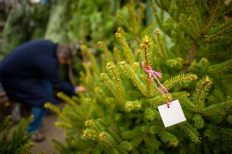 ramsey boy scouts christmas tree sale tips from town