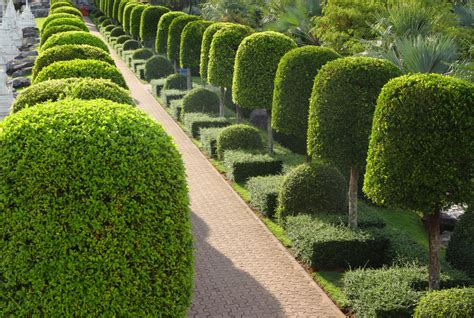 green animals topiary garden cost 53 stunning topiary trees gardens plants and other shapes