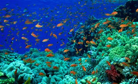 film dokumenter bawah laut gambar pemandangan di dasar laut yang indah kumpulan