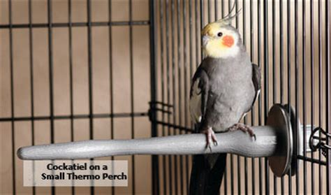will a heat l keep a dog warm 10 tips on how to keep pet birds warm in winter