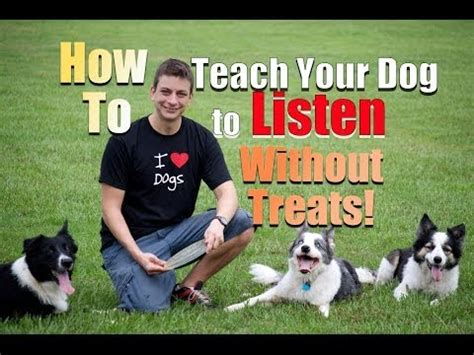how to your without treats how to your not to jump doovi