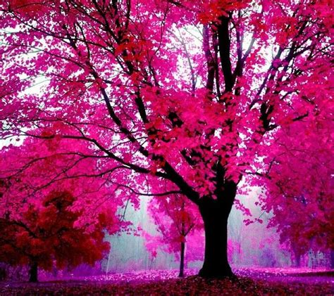 pretty trees really pretty wallpaper pictures