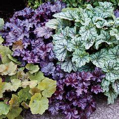 1000 images about shade plants for fall on pinterest
