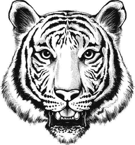 black and white tiger tattoo utterly mind boggling facts about the white bengal tiger