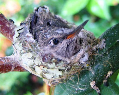 top 28 do hummingbirds return to the same nest