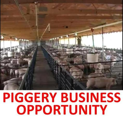Backyard Piggery Business magnegosyo tayo how to start a backyard piggery business
