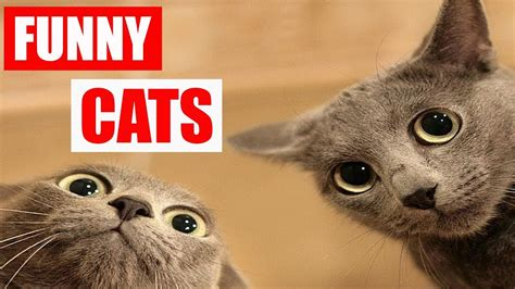 8 Ways To A Laugh At Your Cats Expense by Top Cats Try Not To Laugh Challenge Cat