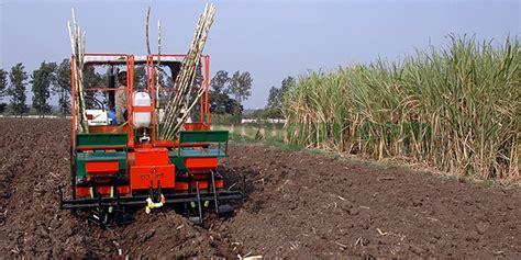 Sugarcane Planter by Mechanical Sugarcane Planter Sugarcane Cutter Planter