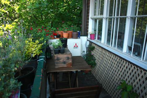 grow  edible balcony garden wandering spice