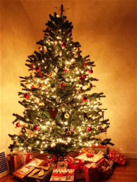 pflanzenforschung de ihr weihnachtsbaum sah vor 100
