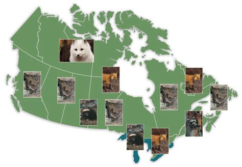 In Canada by A Rabid Deer In Minnesota A Reminder For Rabies
