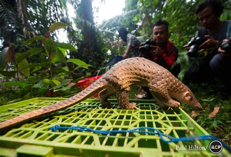 National Geographic Indonesia April 2006 pangolin prison national geographic